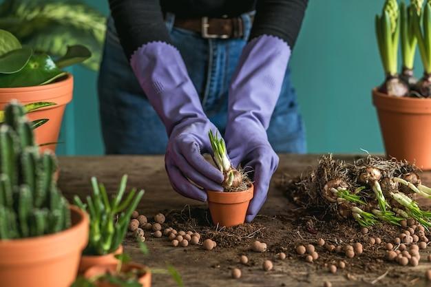 Vrouw tuinman transplanteert prachtige planten, cactussen, vetplanten naar keramische potten en zorgt voor huisbloemen op de retro houten tafel voor haar concept van huistuin.