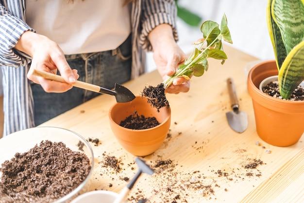Vrouw tuinmannen verzorgen en verplanten plant een in een nieuwe keramische pot op de houten tafel.