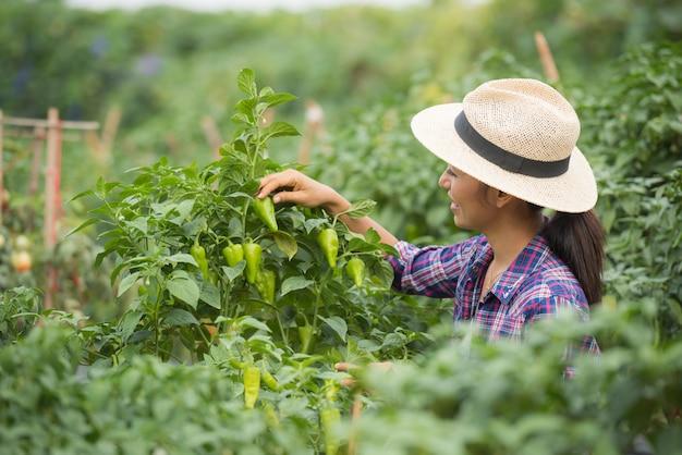 Vrouw van middelbare leeftijd boer, met biologische chili bij de hand