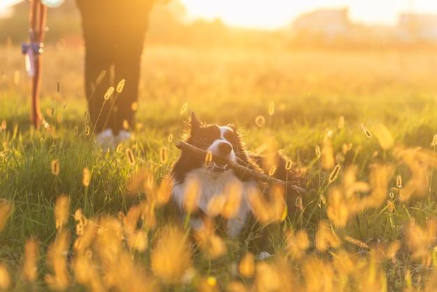 Vrouw van middelbare leeftijd spelen met haar border collie hond