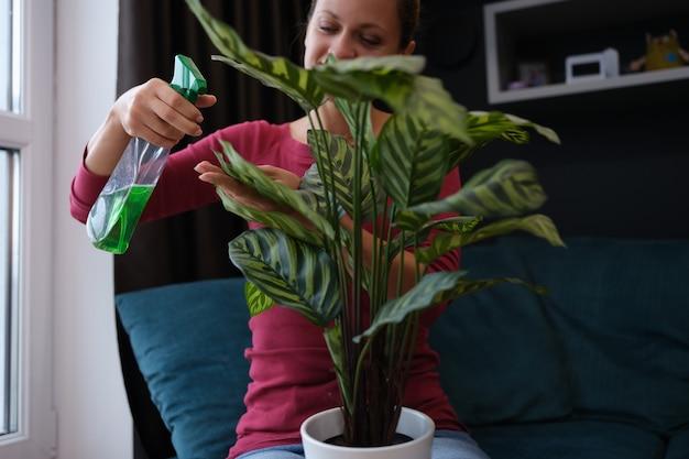 Vrouw verzorgt de planten in huis door groene plant te besproeien met groene vloeistof uit een spuitfles
