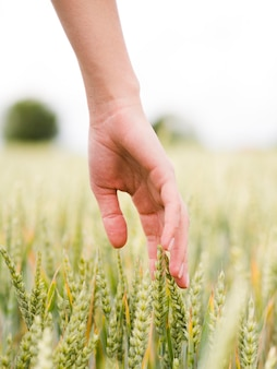 Vrouw wat betreft de tarwe met zijn handclose-up