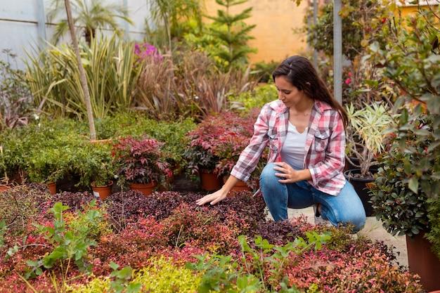 Vrouw wat betreft planten in serre