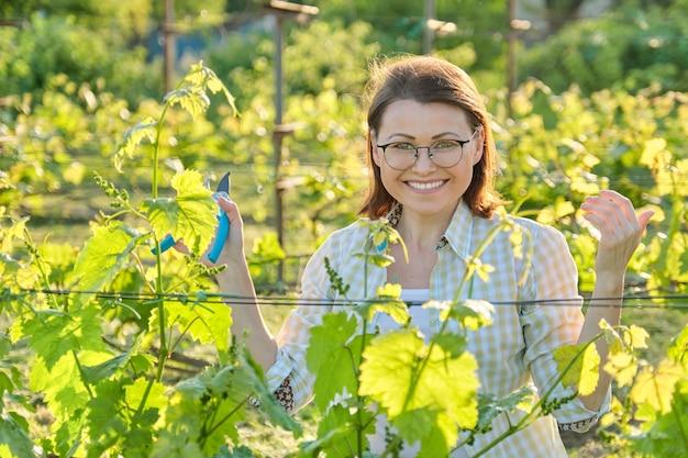 Vrouw werkt met wijnstokken struiken, lente zomer snoeien wijngaard, vrouw met snoeischaar schaar op zonnige dag
