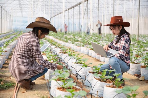 Vrouw wetenschap assistent, landbouwofficier. in de meloen van het broeikasbedrijfonderzoek