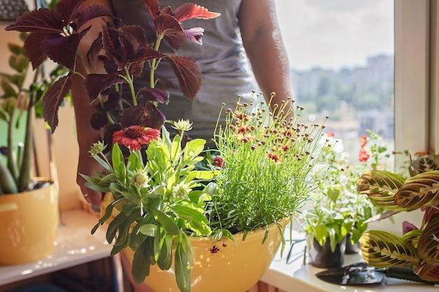 Vrouw zorgt voor huisplanten op het balkonraam plantouderconcept