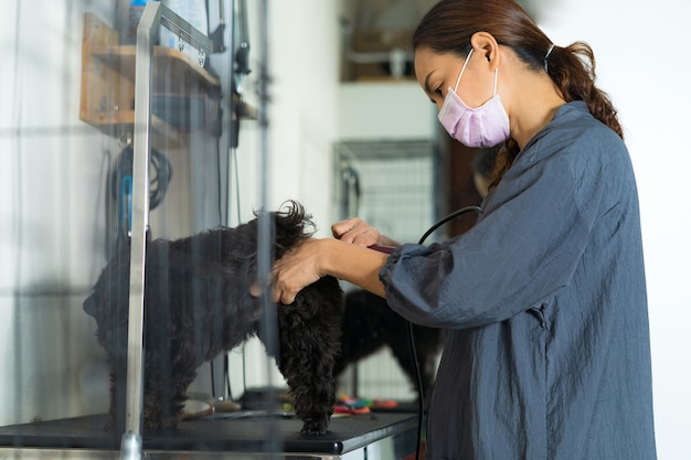 Vrouwelijk groomer scherp haar van kleine hond bij een salon in de schoonheidssalon voor honden