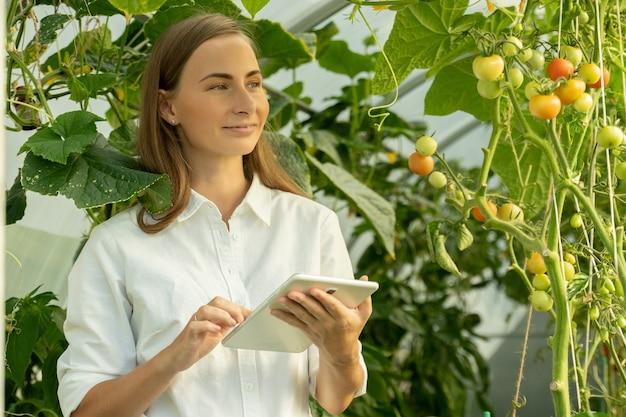 Vrouwelijke agronoom voert een inspectie uit van de tomatenteelt in een kas en betreedt de indica...