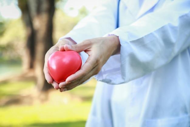 Vrouwelijke artsen houden een rood hart en maken een hartvormige hand. de achtergrond is een groene boom.