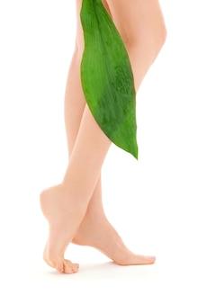 Vrouwelijke benen met groen blad over wit