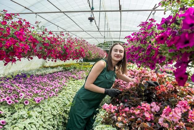 Vrouwelijke bloemist in overall zorgt voor bloemen in een kas