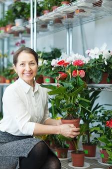 Vrouwelijke bloemist met anthurium plant