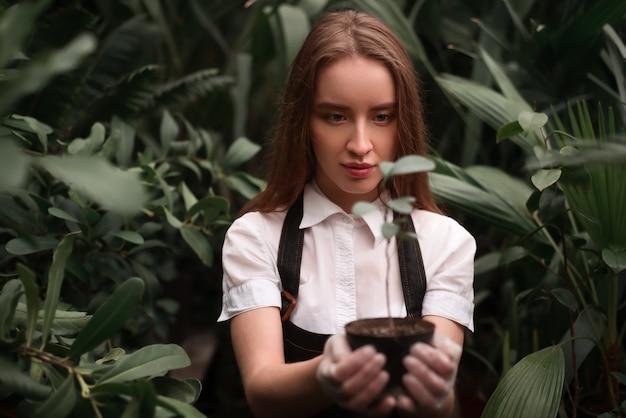 Vrouwelijke bloemist werkt met kamerplant in pot