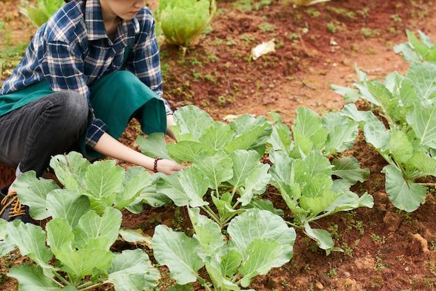Vrouwelijke boer aanraken van koolbladeren
