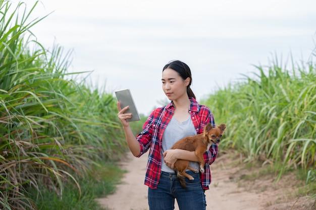 Vrouwelijke boer met haar hond aan het werk in sugarcane farm om gegevens te verzamelen om zijn boerderij te bestuderen en te ontwikkelen om de productiviteit in de toekomst te verbeteren.