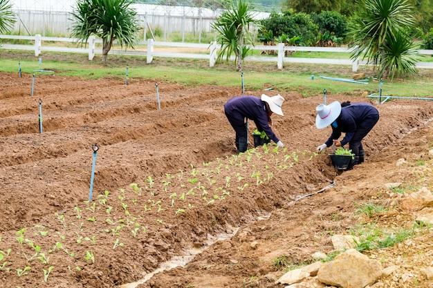 Vrouwelijke boeren planten sla