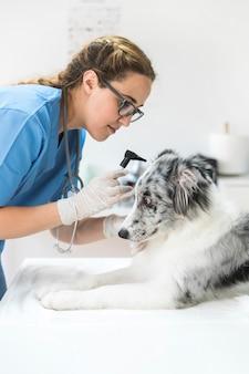 Vrouwelijke dierenarts die het oor van de hond met otoscoop in kliniek onderzoekt