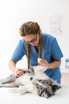 Vrouwelijke dierenarts die hond voor vlo met kam onderzoekt