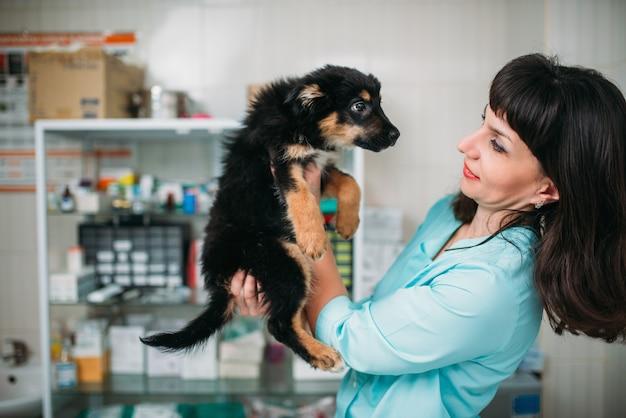 Vrouwelijke dierenarts houdt hondje in handen, veterinaire kliniek. dierenarts, behandel een zieke hond