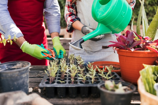 Vrouwelijke en mannelijke tuinman die zaailingen in krat behandelen