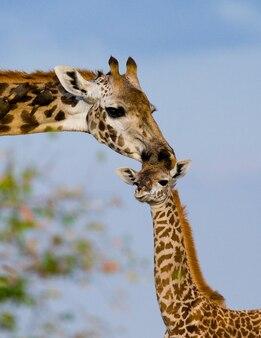 Vrouwelijke giraf met een baby in de savanne.