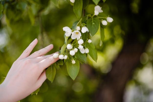 Vrouwelijke hand die bloeiende witte bloem op groene uitbarsting houdt