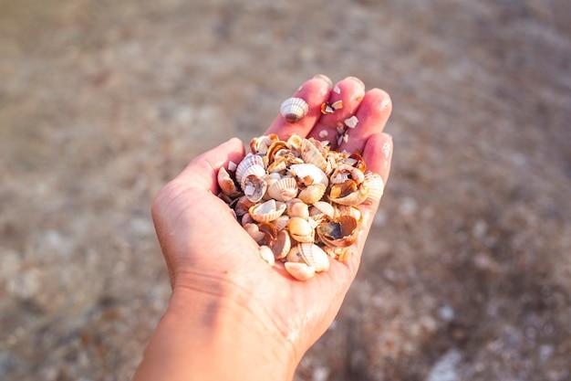 Vrouwelijke hand die heel wat schelpen op een strandachtergrond houdt.