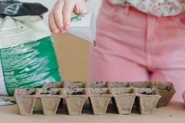 Vrouwelijke hand die zaden in turfpotten plant. vroege zaailingen worden gekweekt uit zaden in kisten van het huis op de vensterbank.