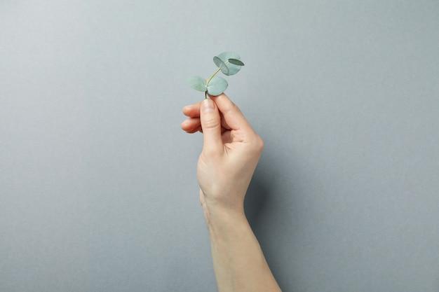 Vrouwelijke hand houden eucalyptus takje op grijze achtergrond