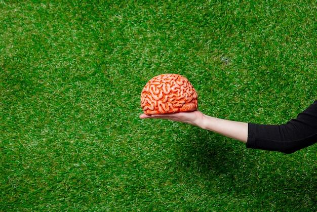 Vrouwelijke hand houden menselijke hersenen over groen gras