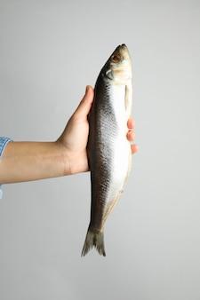 Vrouwelijke hand houdt haringvissen op lichtgrijs oppervlak