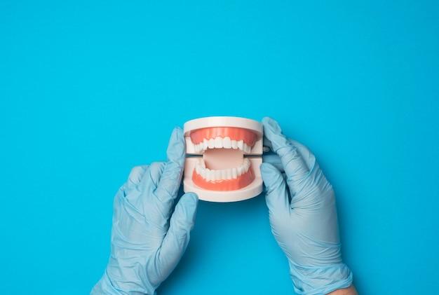 Vrouwelijke hand in blauwe latex handschoenen houdt plastic model van een menselijke kaak met witte tanden op een blauwe achtergrond, mondhygiëne