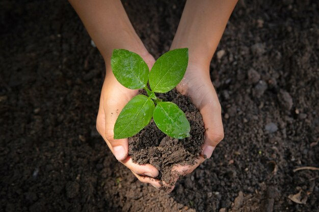Vrouwelijke hand met boom. milieu dag van de aarde in de handen van bomen zaailingen groeien