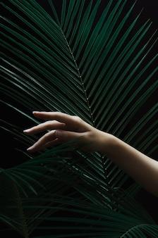 Vrouwelijke hand met palmbladen op zwarte dark Premium Foto