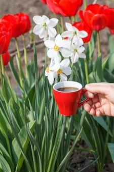 Vrouwelijke hand met polshorloge houdt een porseleinen kopje koffie vast met bloeiende witte narcissen en rode tulpen op de achtergrond. selectieve focus op beker
