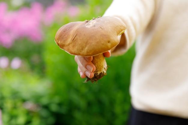 Vrouwelijke hand met rauwe eetbare paddenstoel met bruine dop penny bun in herfst bos achtergrond. oogsten plukken grote eekhoorntjesbrood in natuurlijke omgeving. koken heerlijk biologisch voedsel concept.