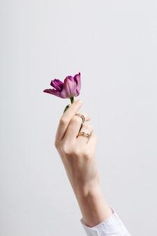 Vrouwelijke hand met ringen houdt paarse tulp op grijze achtergrond