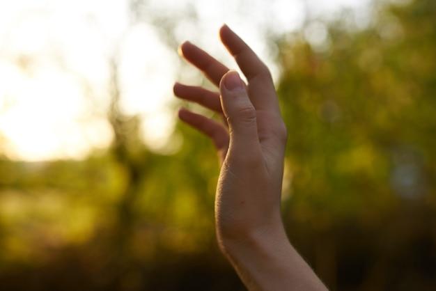 Vrouwelijke hand natuurpark zomer bomen zon groen gras