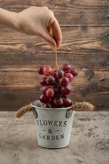 Vrouwelijke hand nemen cluster van rode druiven uit metalen emmer.