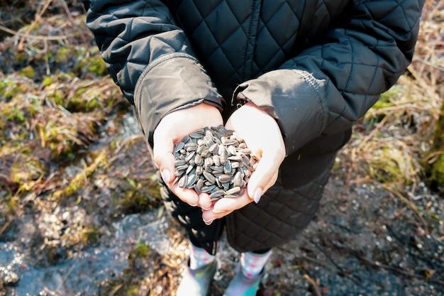 Vrouwelijke handen die een bos van zonnebloempitten houden die vogels voedt
