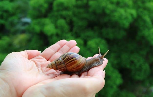 Vrouwelijke handen die een kleine slak voorzichtig terugbrengen naar de groene struik