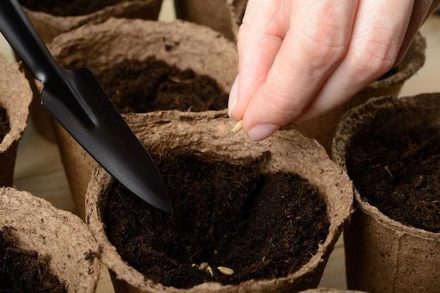 Vrouwelijke handen die zaden planten in een turfpot