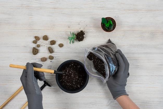 Vrouwelijke handen in grijze tuinhandschoenen gieten de aarde in een pot voor het planten van een cactus