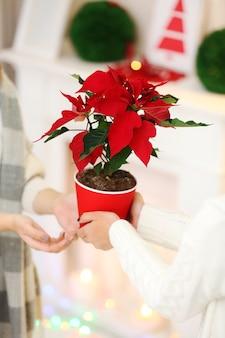 Vrouwelijke handen met kerstbloem poinsettia