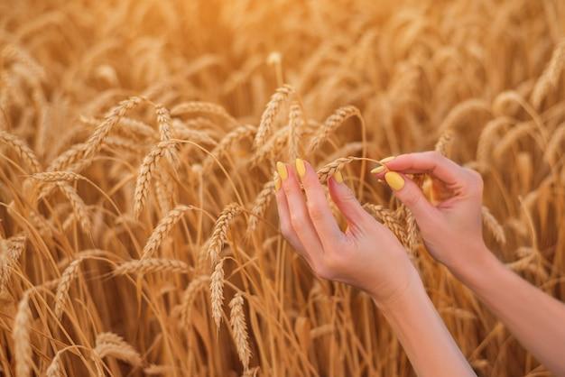Vrouwelijke handen op het veld van rijpe tarwe. glutenvrij concept.