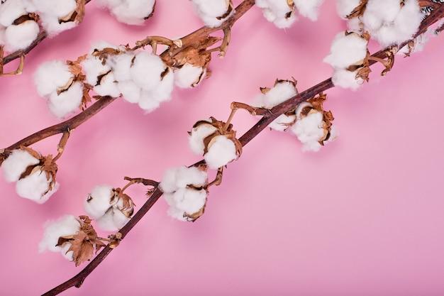 Vrouwelijke lichtroze achtergrond met tak van katoen bloem