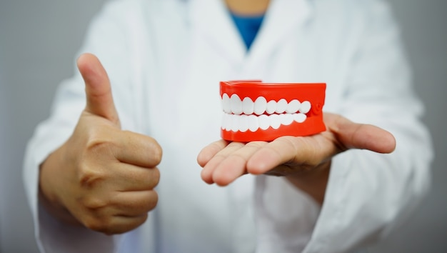 Vrouwelijke tandarts die een kunstgebit houdt en een duim opgeeft.