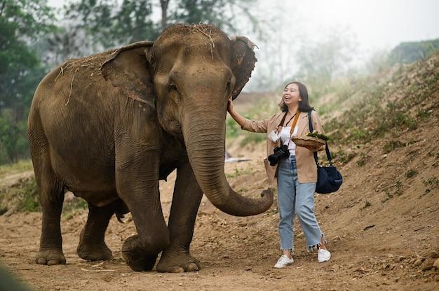 Vrouwelijke toeristen voeden de olifanten op een leuke manier.