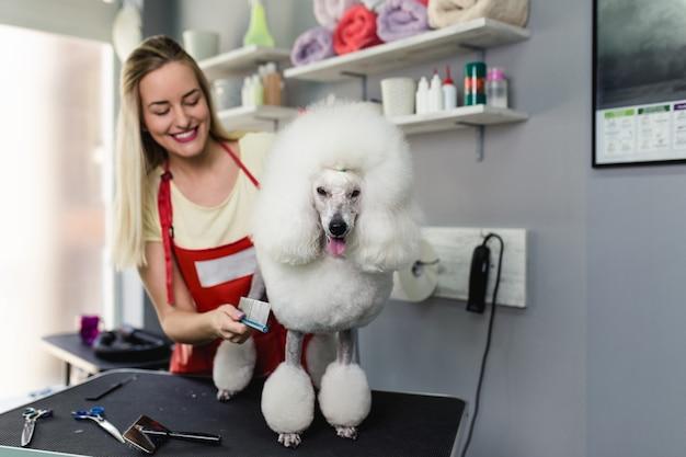 Vrouwelijke trimmer die miniatuur witte poedel borstelt bij trimsalon.