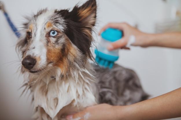 Vrouwelijke trimmer masseren terug van schattige hond tijdens het wassen